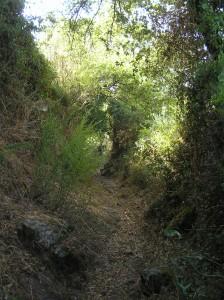 Descens per un sender cap al riu Molinos (Santulussurgiu, Sardenya)