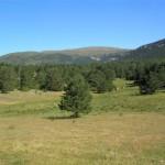 El Tossal de l'Orri (2.439 m.) des de prop del port del Cantó (Alt Urgell, Països Catalans)